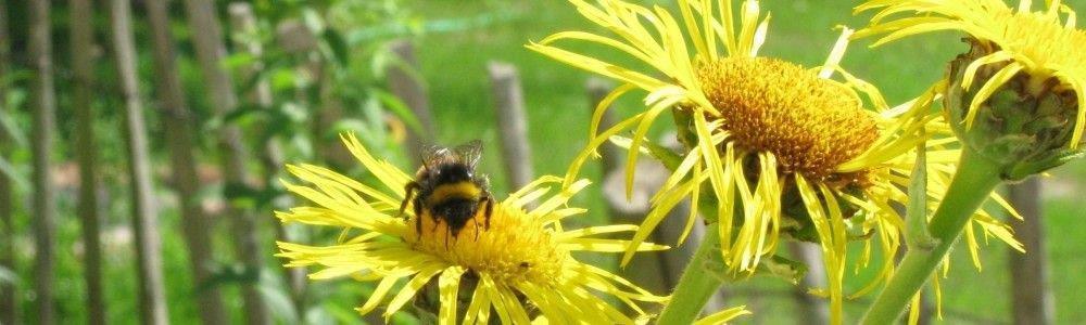 Biene mit Blumen